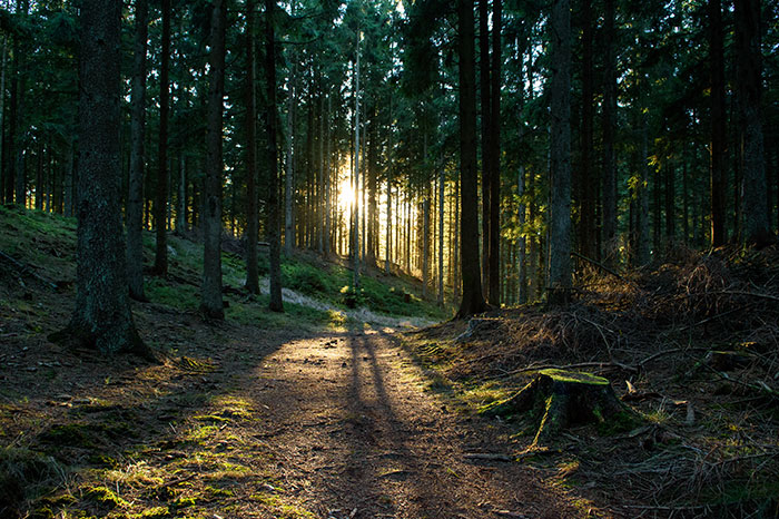 denmark-forest-at-sunrise